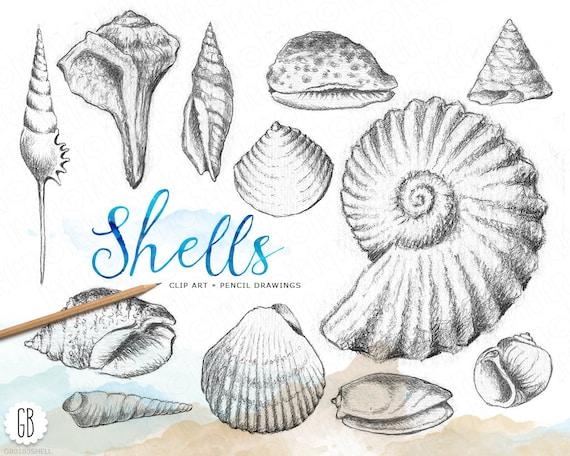 Shells, hand drawn, pencil, vintage inspired, shell drawing, beach wedding, sea life, clip art ...