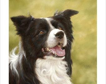 Border Collie Portrait. Limited Edition Print. Personally signed and numbered by Award Winning Artist JOHN SILVER. jsfa074