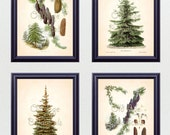 Antique Botanical Print SET of 4 8x10 Art Prints Fir Pine Trees Perfect Christmas GIft Evergreen Winter Plants Home Decor to Frame BF0623