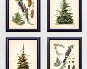 Antique Botanical Print SET of 4 8x10 Art Prints Fir Pine Trees Perfect Christmas Gift Evergreen Winter Plants Home Decor to Frame BF0623