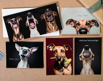 Set of 15 dog greeting cards