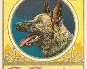 El Favorito German Shepherd Dog-Echo 8x10 Satin Print