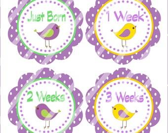 Bird Baby Sticker, DIY Baby Sticker, Bodysuit Sticker, DIY Photo Prop, Month Sticker, Printable Months, 1 To 12 Months - Printables 4 Less
