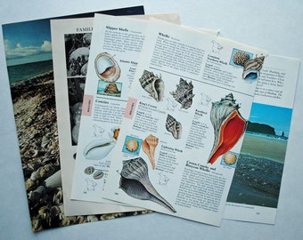 Beach Themed Vintage Paper Pack
