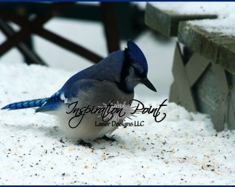 Bluejay in the Snow Photograph Art Print FREE SHIPPING!