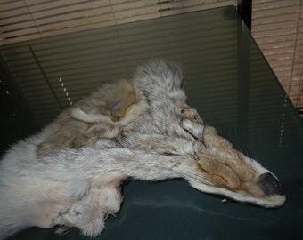 Vintage Coyote Totem facial Hide