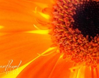 Orange Daisy, Flower Photography, Nature Photography, Macro Print, Orange Decor, Daisy Macro, Bright Wall Art, 8x10 8x12 9x12, 10x13 11x14