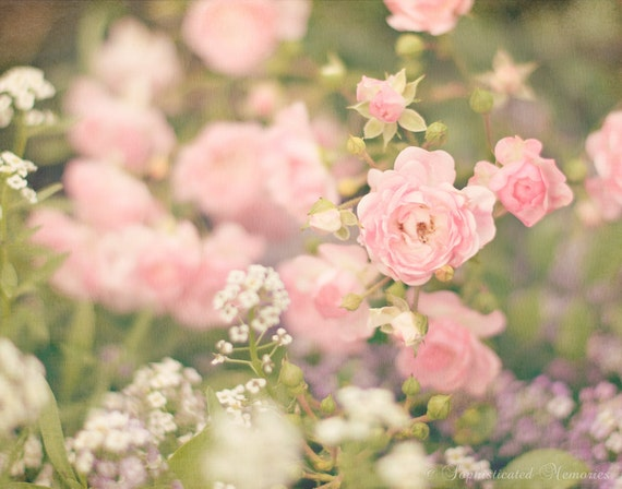 Fairy Rose Art Pink Flower Photography Pink Roses 11x14