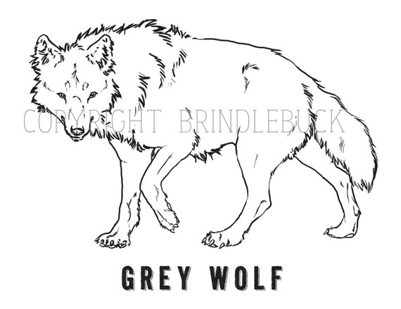 gray wolf coloring page - items similar to grey wolf coloring page download child