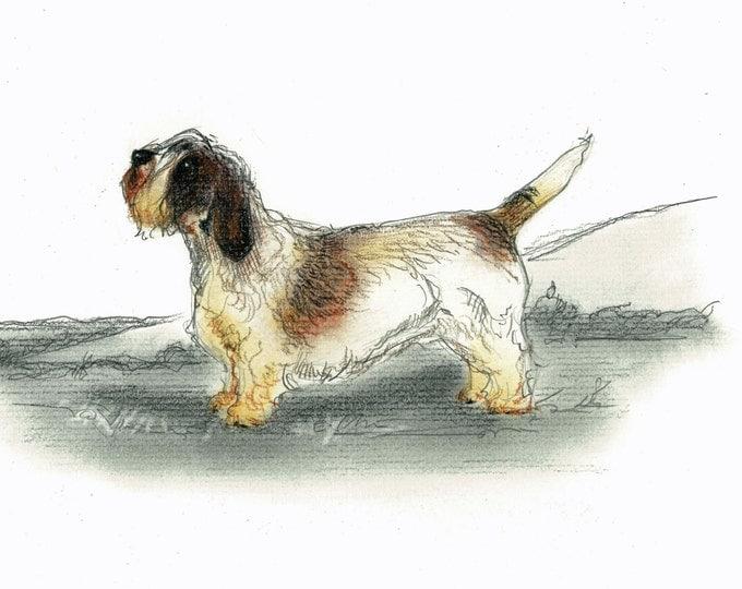 Petite Basset Griffon Vendeen Dog Art Vintage Style Print