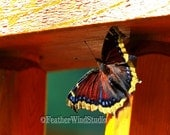 Mourning Cloak | Nature Photography | Sunning Butterfly | Nymphalis antiopa | Deck Railing | Insect Photo Art | Wildlife Decor | Color Print