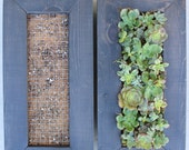 DIY Succulent Living Wall ( Vertical Garden). Awesome Gift!