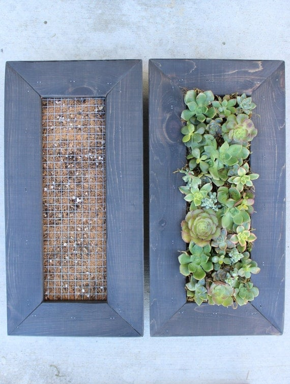 Diy succulent living wall vertical garden by onewithplants for Diy vertical garden wall