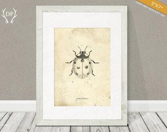 Beetle | Print art | Wall art | Hand drawn ladybird | bug | Original artwork | Printable insect | Room decor, vintage shabby, science books