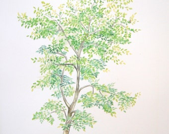 11X14 Beech Tree Watercolor painting art print Tree Painting Tree Art Tree Print Tree Watercolor botanical beech Tree Painting Wall decor