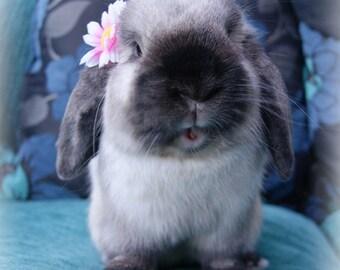 Flower for bunny's!
