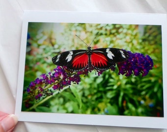 Butterfly Greeting Card**Nature Photography**Blank Note Card**Garden Photo**Thank You Card