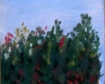 Farm Cedars, trees, landscapes, Salisbury, North Catolina, 3x5.5, original art, pastel painting