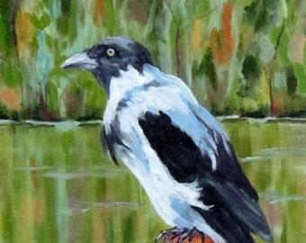 Lough Gur Magpie, 9 x 12, Ireland, magpie, Co Limerick, original oil painting
