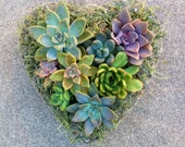 SUCCULENT HEART PLANTER Valentine's Day, Mother's Day, Birthday Get Well Just Because Bridal Anniversary Sympathy Succulent Planter Wedding