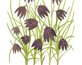 LARGE Fritillaria botanical art print, botanicals, floral art print, watercolor giclee print
