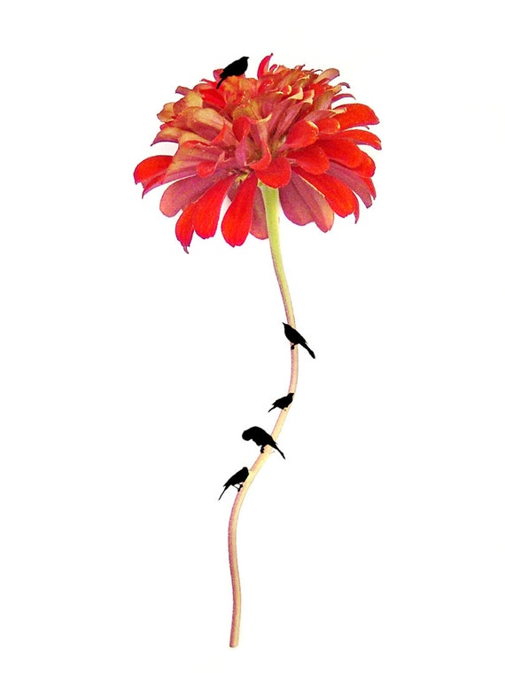 Red Flower Fine Art Photograph Beneath the Zinnia Tree Bird Surreal Silhouette Whimsical