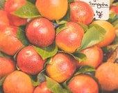 Photograph of Oranges, kitchen wall decor, cafe wall art, Spain photography, nature art print, dining room, fruit home decor, naranjas