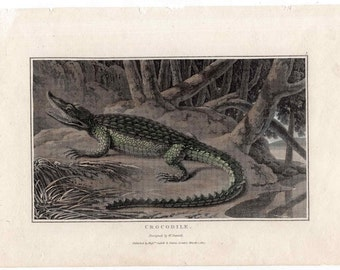 1807 ANTIQUE CROCODILE ENGRAVING original antique amphibian engraving - lizard reptile