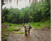 Baby Elephant, Photography Note Card