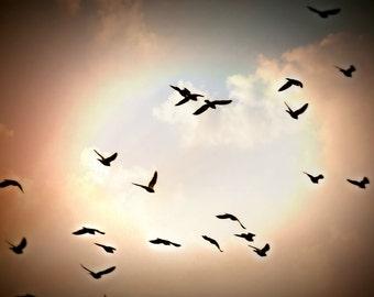 Pretty Birds,8x12 Image,Bird Photography,Bird Image,Sky Image,Sky Photography,Imaginative Image,Dreamy Photo,Inspirational Image