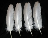 x4 Real Turkey Feathers: Imitation Eagle, T9160 - meleagris gallopavo