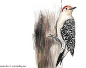 "Red Bellied Woodpecker Print, Bird Illustration, Digital Drawing, Animal Wildlife Art Postcard  4"" x 6"" RBW"