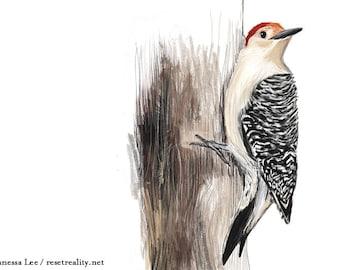 Red Bellied Woodpecker Print, Bird Illustration, Digital Drawing, Animal Wildlife Art Postcard RBW