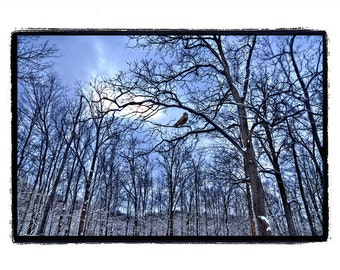 nature photography, Crow,Raven,Forest,Winter, Sapphire Blue, Stormy, Bird, Trees ,Photography, Print 8x10