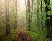Woodland, Nature Photography,  Green, Fall, Autumn, Emerald,Path, Trail