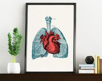 Doctors gift- Heart and Lungs Human Anatomy print- Science students gift- Medical prints wall art  SKA030WA4