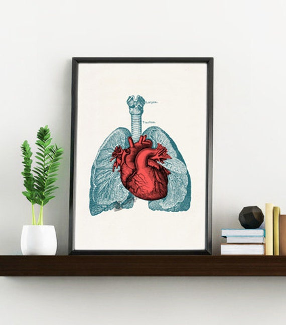 Christmas Sale Doctors gift- Heart and Lungs Human Anatomy print- Science students gift- Medical prints wall art  SKA030WA4