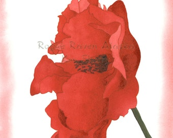 One Red Poppy  - Art Print of Red Poppy