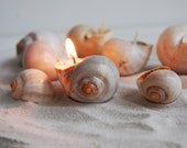 Eco-friendly Candles Set of 6 - Scented Handmade Candles - Reusable Seashells - Wedding Favor - Easter Gift Decor - Valentine's Day Gift