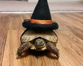Pet Tortoise Costume, Pet Costume, Witch Hat, Pet Witch, Turtle Costume