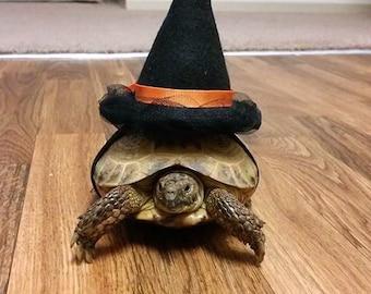 Pet Tortoise Costume, Pet Costume, Witch Hat, Pet Witch, Turtle Costume