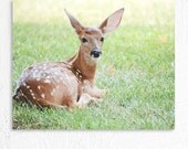 Nature Animal Photography White Tailed Deer Fawn Portrait Photo Print