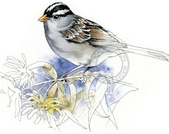 White-crowned Sparrow watercolour - bird art, wildlife art - nature print of original artwork