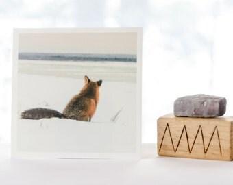 Red fox enjoying the view, dreamy fine art print, nature photograph, wildlife photo, NorthwestTerritories, Canadian photography, fox artwork