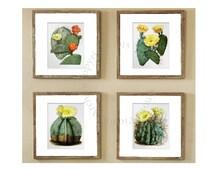 Southwest Decor Botanical Print Set of 4 Wall Art Cactus Yellow Orange Green Flowers Southwestern Desert Wall Decor GnosisPictureArchive