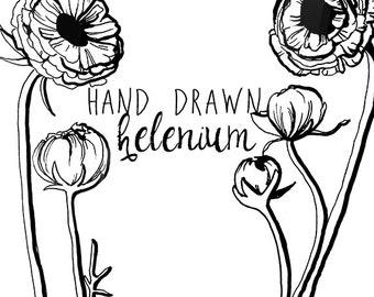 Ink Drawing Helenium Flower Clipart Flowers Clip Art Digital Clipart Flower Vintage Style Floral Clipart Scrapbooking