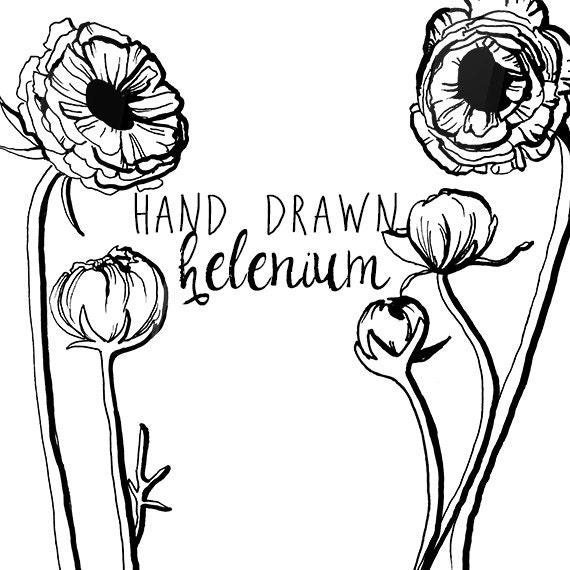 ink drawing helenium flower clipart flowers clip art digital clipart flower vintage style floral clipart scrapbooking from digitalpresscreation on etsy