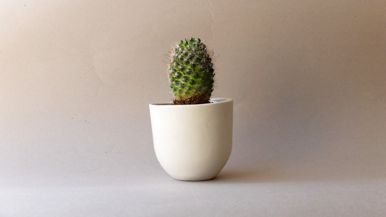small ceramic planter succulent planter ceramic pot modern - 🔎zoom