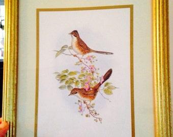 Vintage Bird Picture
