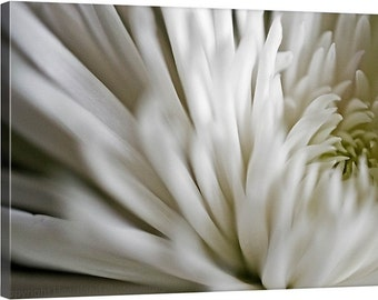 Canvas Art, Macro Photography, White Flower, Spider Mum, Fine Art Photography, Nursery Wall Art, Photo Canvas, Romantic Bedroom, Neutral